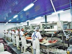 The employee on the Polish-German meat processing plant (Poland)
